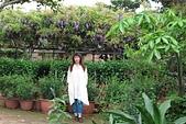 鄉村阿勃勒、紫藤花開。:3.JPG