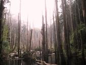 溪頭妖怪村遊:杉林溪'忘憂森林