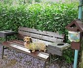 鄉村阿勃勒、紫藤花開。:2.JPG
