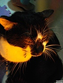 My Pets Vol.4:20110123-11.JPG