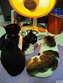 My Pets Vol.4:20110123-12.JPG