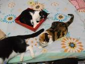 My Pets Vol.5:20110902-001.jpg
