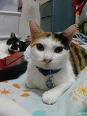 My Pets Vol.5:20110902-002.jpg