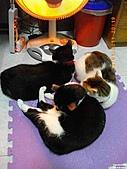 My Pets Vol.4:20110123-14.JPG