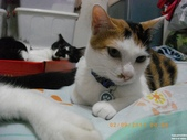 My Pets Vol.5:20110902-003.jpg