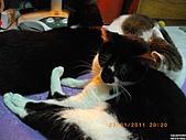 My Pets Vol.4:20110123-15.JPG