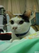 My Pets Vol.5:20110902-005.jpg