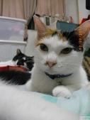 My Pets Vol.5:20110902-006.jpg