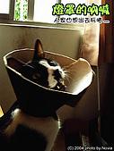 My Pets:燈罩的吶喊