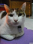 My Pets Vol.4:20110123-16.JPG
