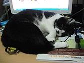 My Pets Vol. 3:2010512-03.JPG