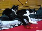 My Pets Vol. 3:2010512-05.JPG