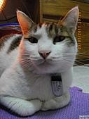 My Pets Vol.4:20110123-17.JPG
