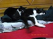 My Pets Vol. 3:2010512-07.JPG