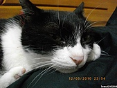 My Pets Vol. 3:2010512-08.JPG