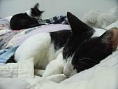 My Pets:還是枕頭好睡.....