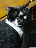 My Pets Vol. 3:2010512-09.JPG