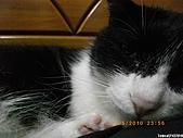 My Pets Vol. 3:2010512-10.JPG