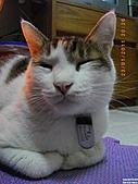 My Pets Vol.4:20110123-18.JPG