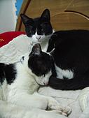 My Pets:他不重, 他是我兄弟