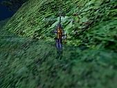 EverQuest I:裝備秀