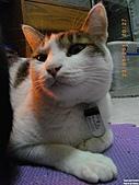 My Pets Vol.4:20110123-19.JPG