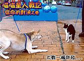 My Pets:貓狗大戰01