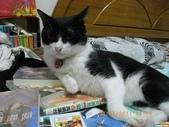 My Pets Vol.5:20110831-001.jpg