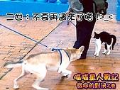 My Pets:貓狗大戰02
