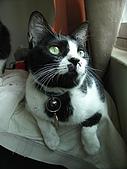 My Pets:IMAG0164