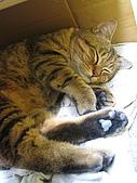 2010/02/23 丸子貓:2010413-MC02.jpg