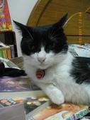 My Pets Vol.5:20110831-002.jpg