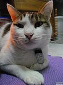 My Pets Vol.4:20110123-20.JPG