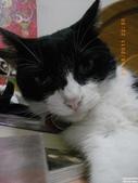 My Pets Vol.5:20110831-003.jpg