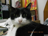My Pets Vol.5:20110831-004.jpg