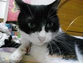My Pets Vol.5:20110831-005.jpg