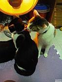 My Pets Vol.4:20110123-21.JPG