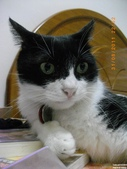My Pets Vol.5:20110831-006.jpg