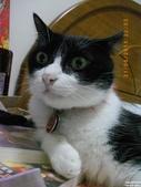 My Pets Vol.5:20110831-007.jpg