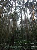 20090214-加里山:加里山11.jpg