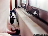 My Pets:a_(28)