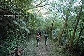 20081129-白石山:17寬闊的林道.JPG