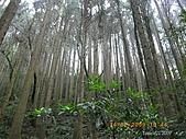 20090214-加里山:加里山13.jpg