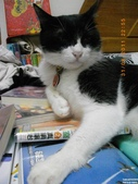 My Pets Vol.5:20110831-008.jpg