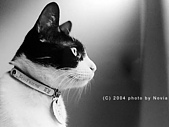 My Pets:a_(33)