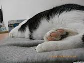 My Pets Vol. 3:2010515-04.JPG