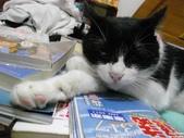 My Pets Vol.5:20110831-009.jpg
