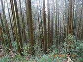 20090214-加里山:加里山17.jpg