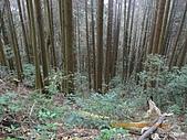 20090214-加里山:加里山18.jpg
