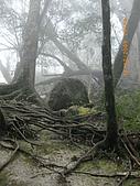 20090214-加里山:加里山21.jpg
